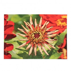 Set de table velours collection fleurs - Zinnia rouge fond vert
