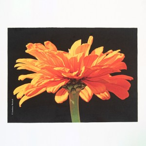 Set de table velours collection fleurs - Zinnia orange fond noir