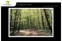 Lot de 6 cartes postales - Photos Frédéric Engel - VOEUX 2