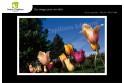 Lot de 6 cartes postales - Photos Frédéric Engel - FLEURS 2