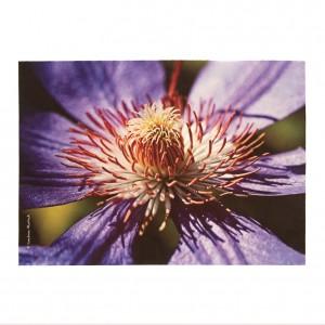 Set de table velours collection fleurs - Clématite violette