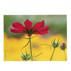 Set de table velours collection fleurs - Cosmo fuschia fond jaune