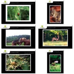 Lot de 6 cartes postales - Photos Frédéric Engel - ANIMAUX 1