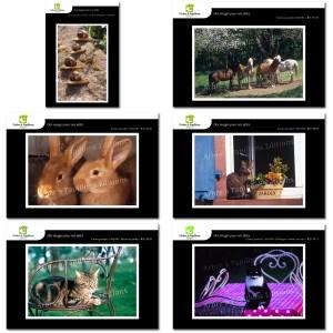 Lot de 6 cartes postales - Photos Frédéric Engel - ANIMAUX 2