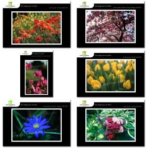 Lot de 6 cartes postales - Photos Frédéric Engel - FLEURS 1